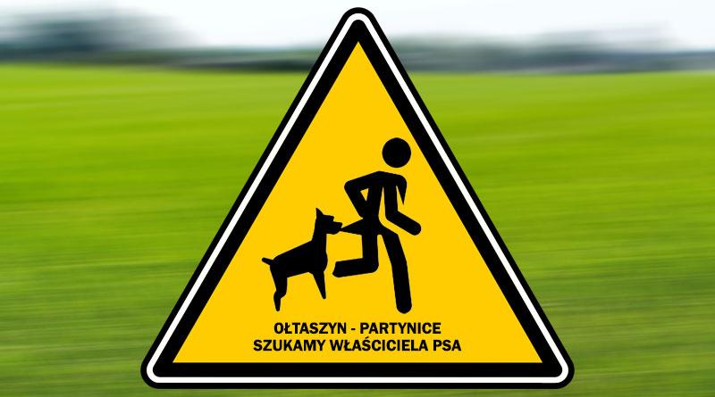 Szukamy właściciela psa! – PILNE!