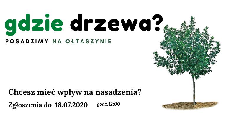 Drzewa na osiedlu Ołtaszyn